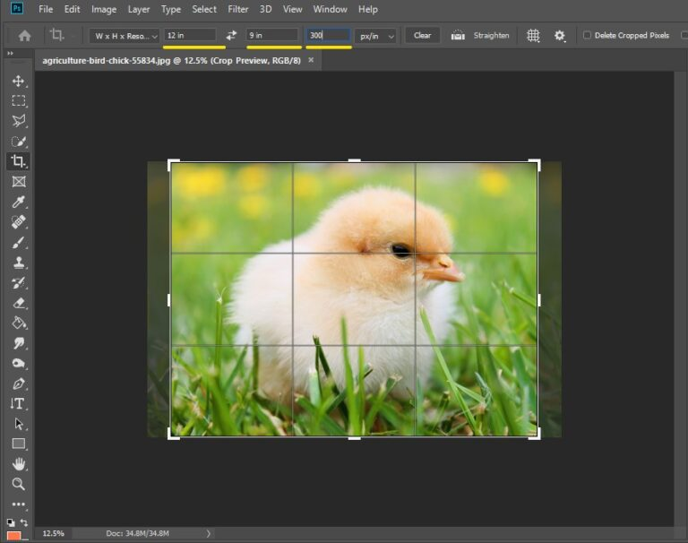 How to change the aspect ratio in Photoshop the right way